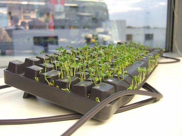 broma-hierba-en-teclado.png