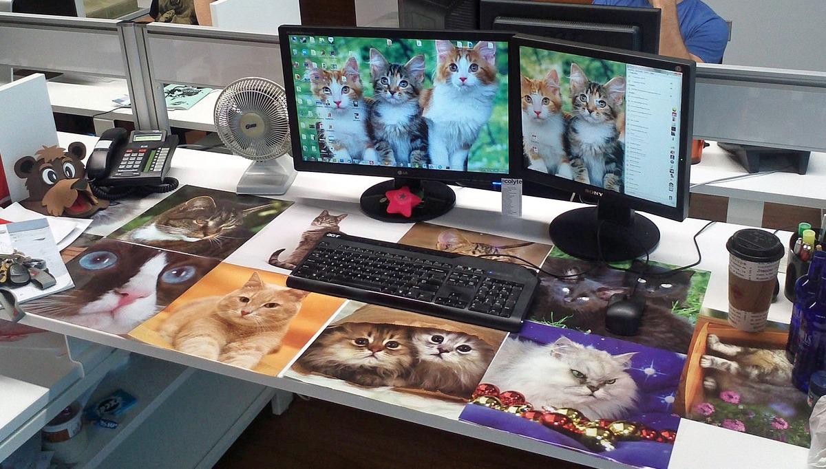 broma-amante-gatos.png