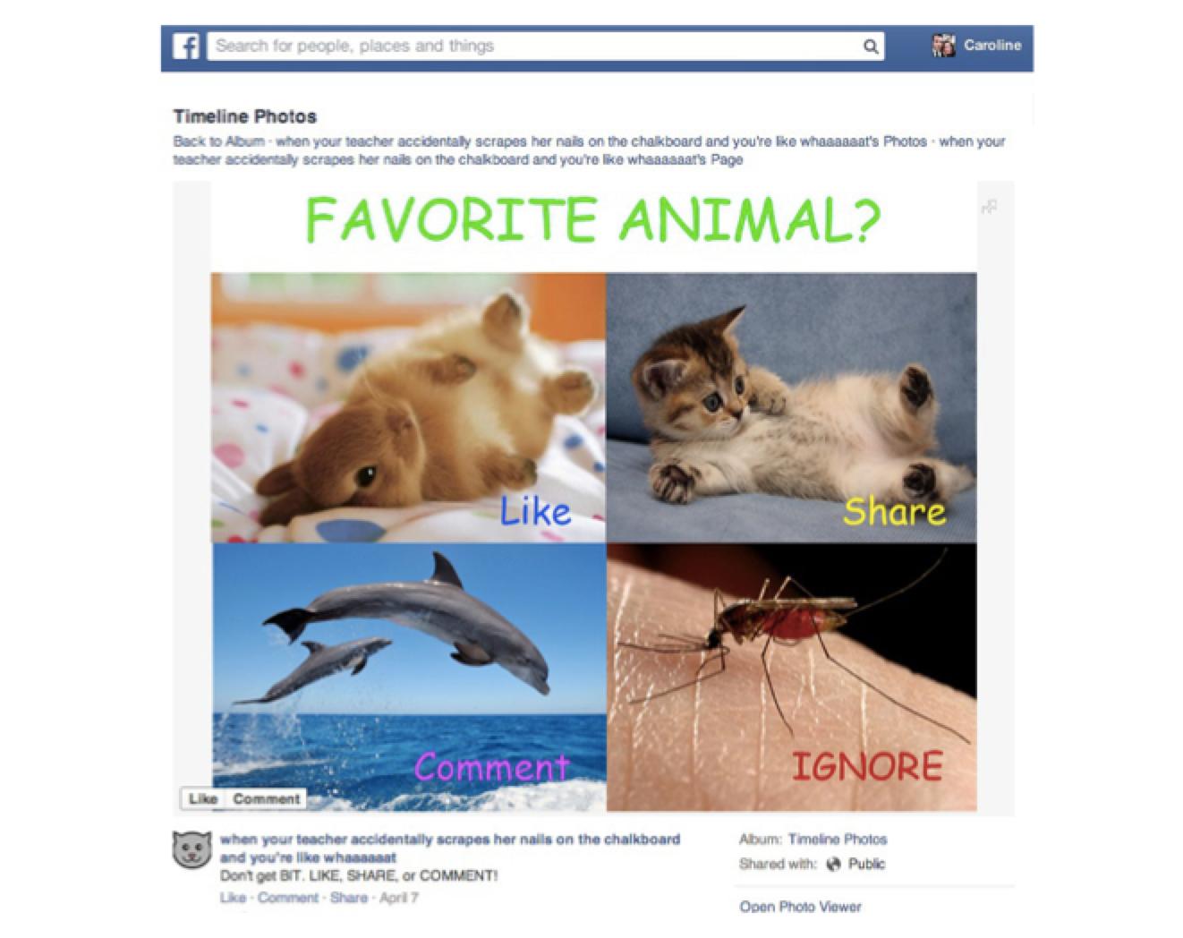 ¿Cómo aprovechar Facebook Ads para amplificar tus contenidos?