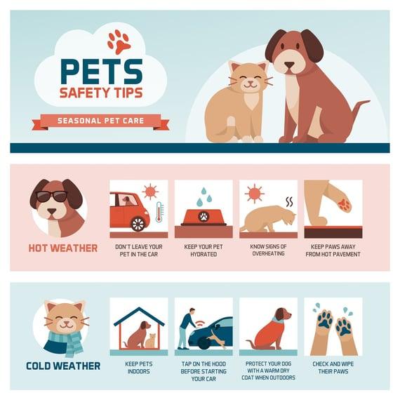 Ejemplo de una infografía informativa con consejos para cuidar mascotas