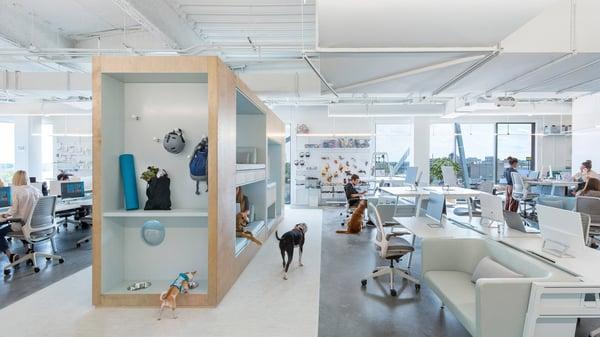 Oficinas creativas de Bark-2