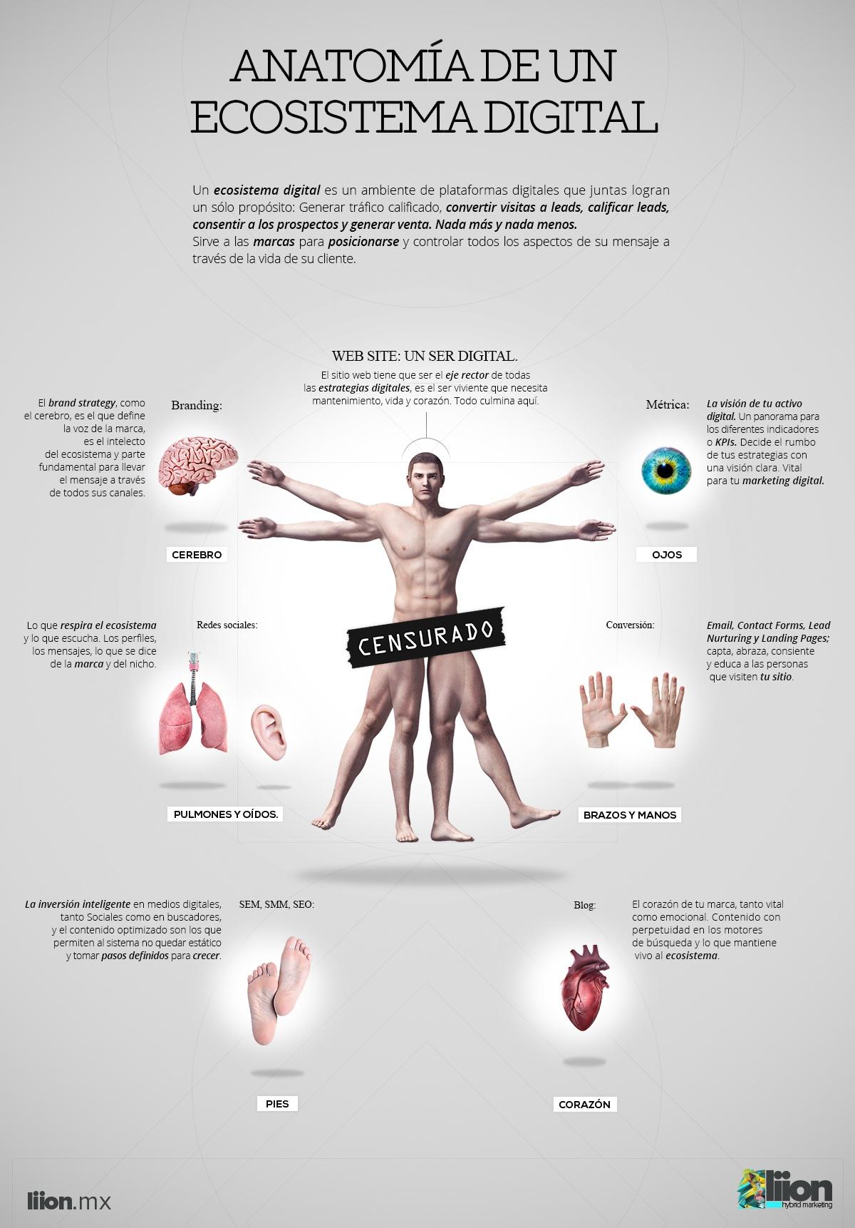 info_anatoma_3.jpg