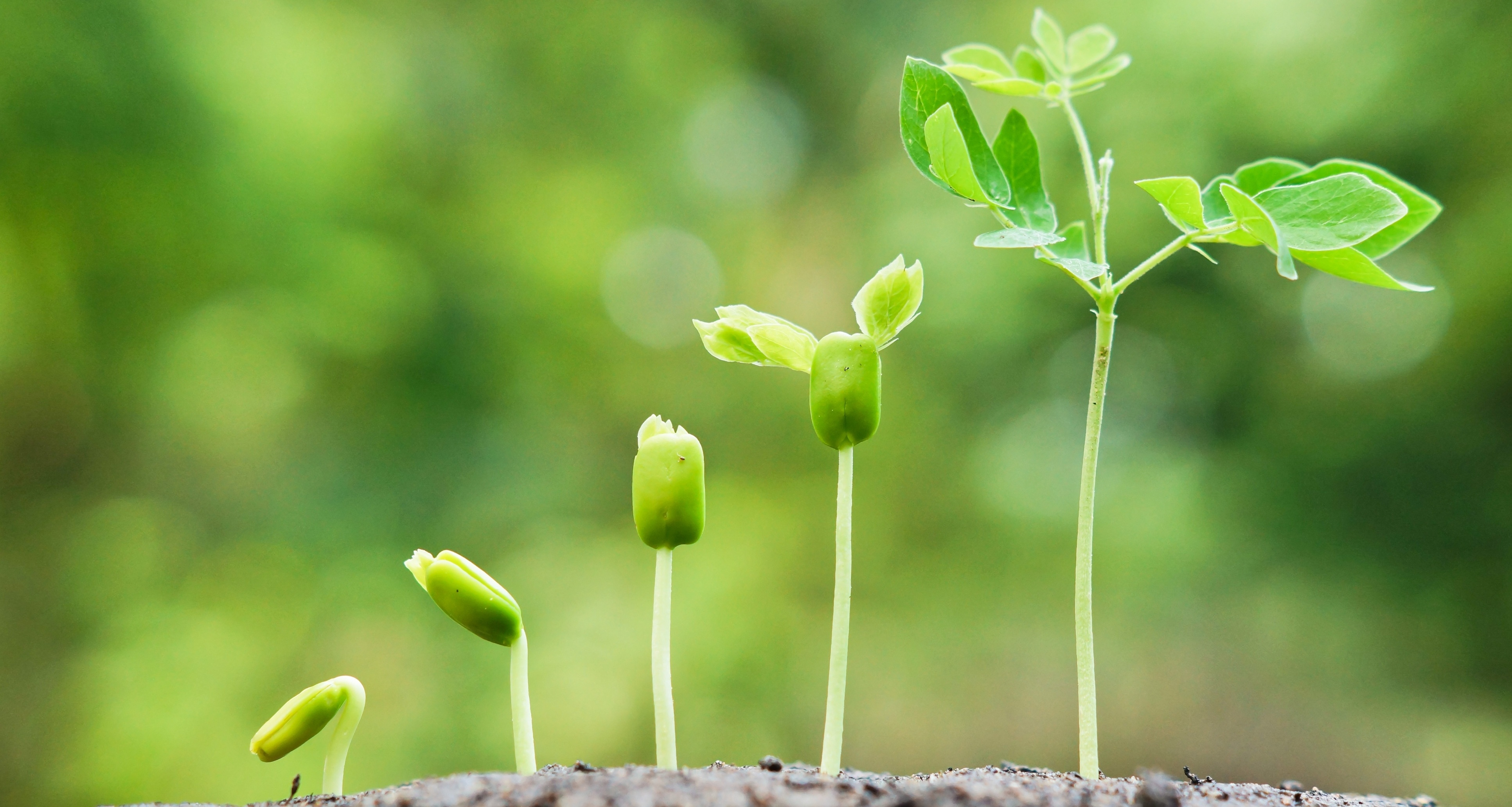growth-company.jpg