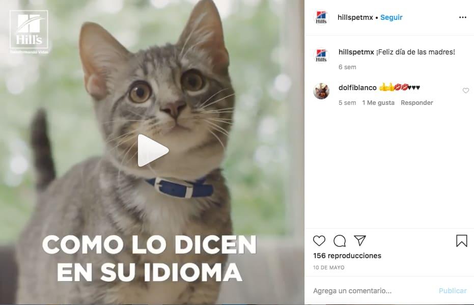 Marketing en Instagram: ejemplo de @hillspetmx