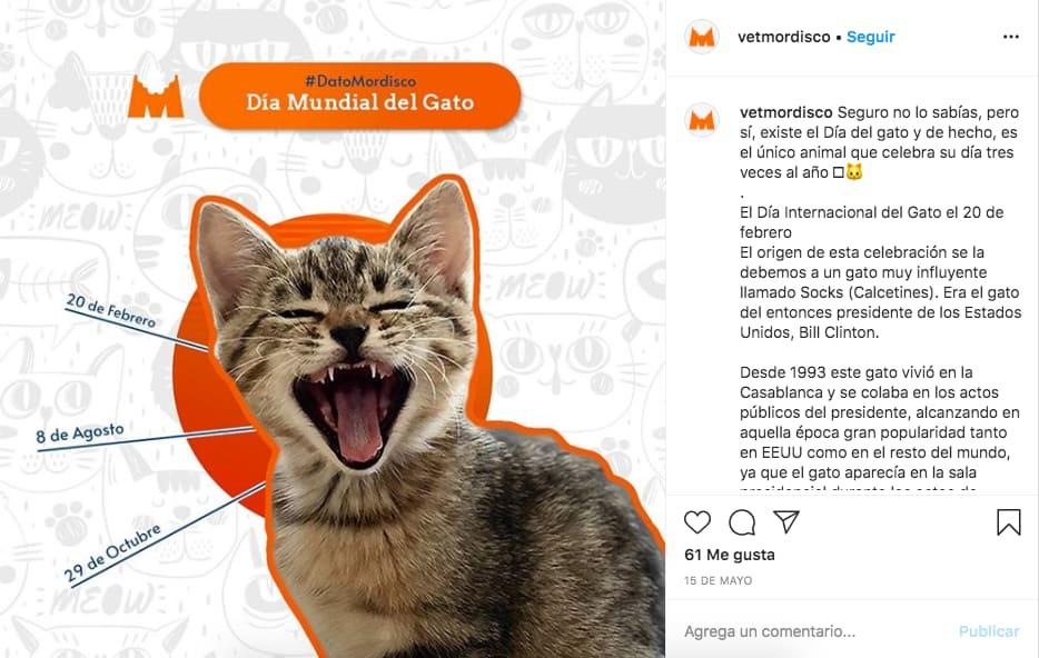 Marketing en Instagram: ejemplo de publicación de @vetmordisco