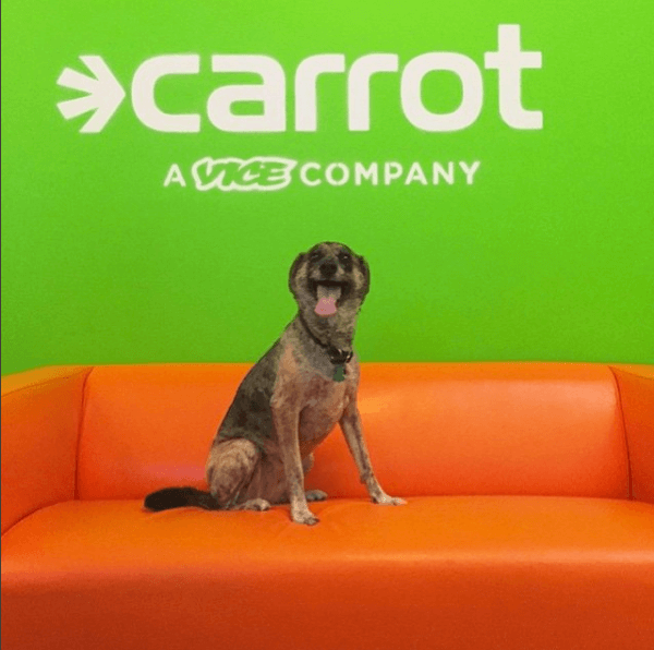 Ejemplo de la agencia creativa Carrot: pet friendly