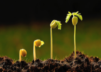 Por qué tu empresa necesita un sistema CRM para crecer