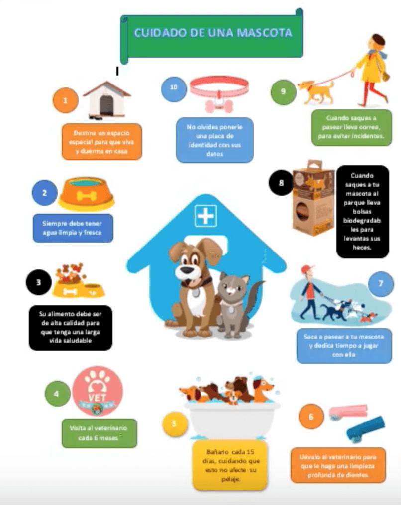 Ejemplo de infografía en Word sobre el cuidado de mascotas
