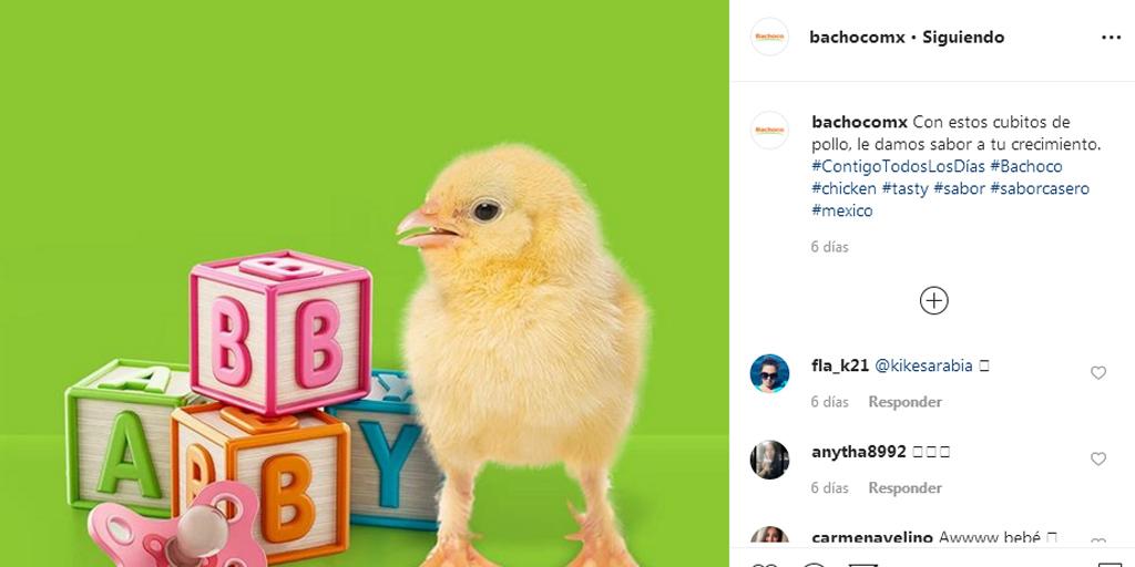 Pie de foto creativo de Bachoco en Instagram