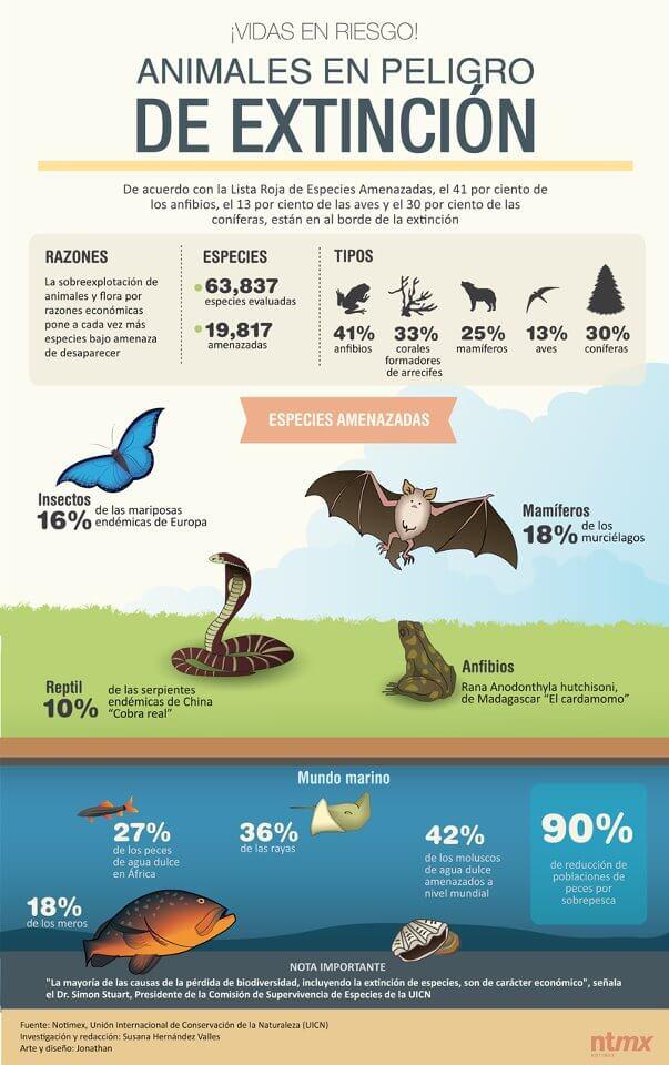 Ejemplo de infografía en animales en peligro